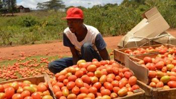 Investment Opportunities in Rumuruti